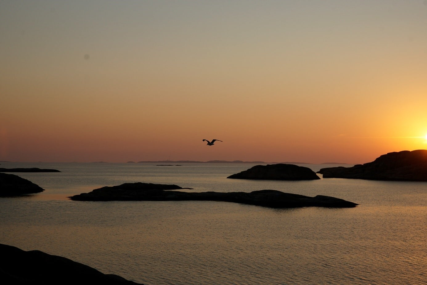 [cml_media_alt id='4089']sunset-bird[/cml_media_alt]